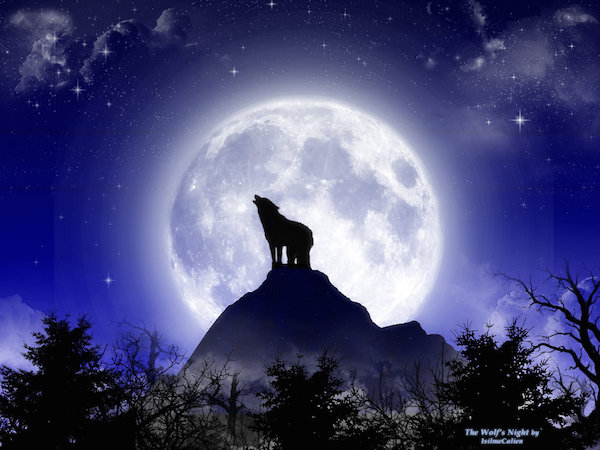 Nicola_bonora_The_Wolf__s_Night_by_isilmecalien